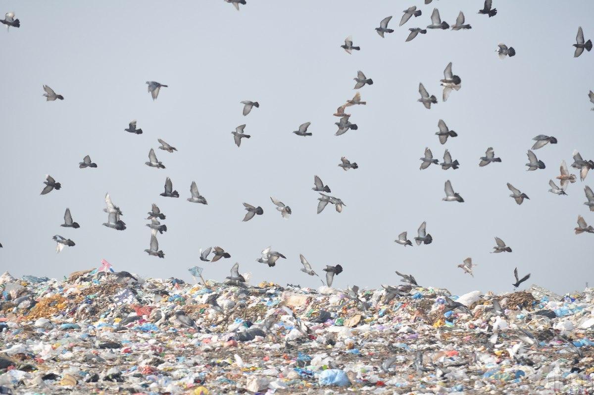 Зеленский предложил Швеции построить мусороперерабатывающие заводы / фото УНИАН