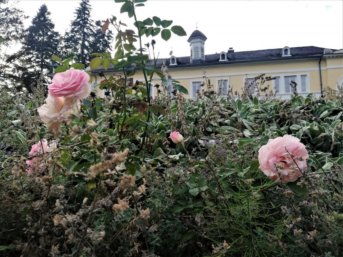 Сад троянд перед Будинком дракона в Трірі / фото Марина Григоренко