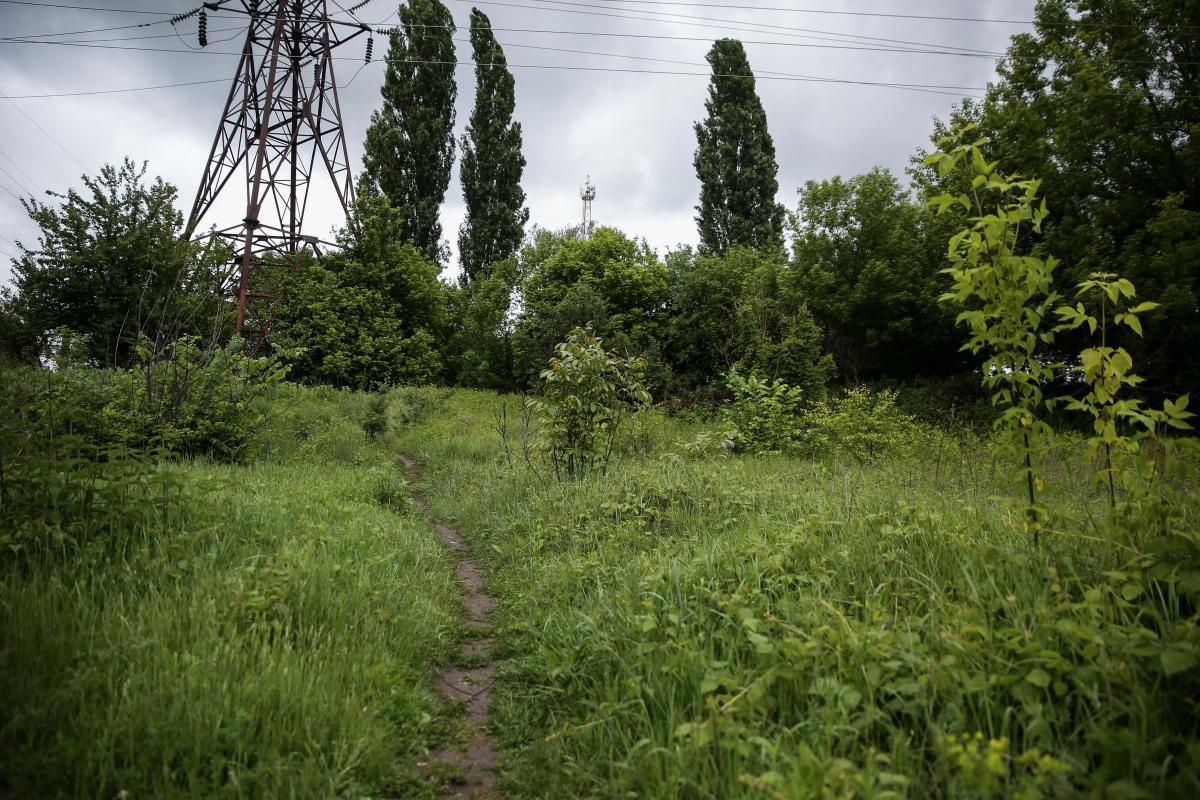 В этом месте стояла «мишень», сразу за деревьями – улица / фото УНИАН