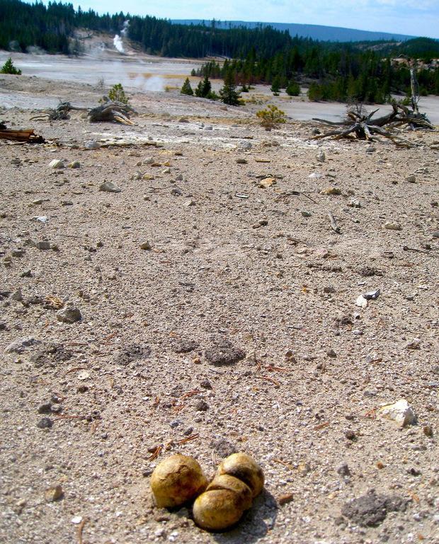 Грибы выживают там, гдене могут даже некоторые бактерии / Фото NASA/Ames Research Center/Kenneth Cullings
