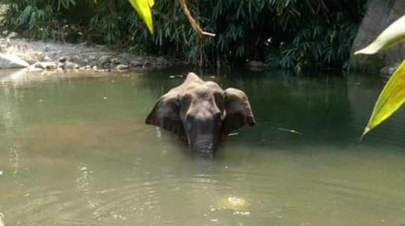Жители пытались вытащить слонихуиз воды, но она упала и умерла/ фото facebook.com/mohan.angamaly
