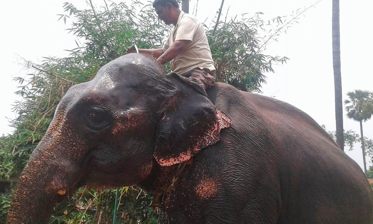 Ахтар Имамвоспитывает слонов с рождения / фото theguardian.com