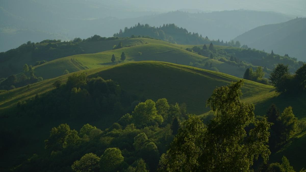 Аби зберегти наші ліси, вкрай важливо комплексно оновити природоохоронне законодавство / фото прес-служба1+1