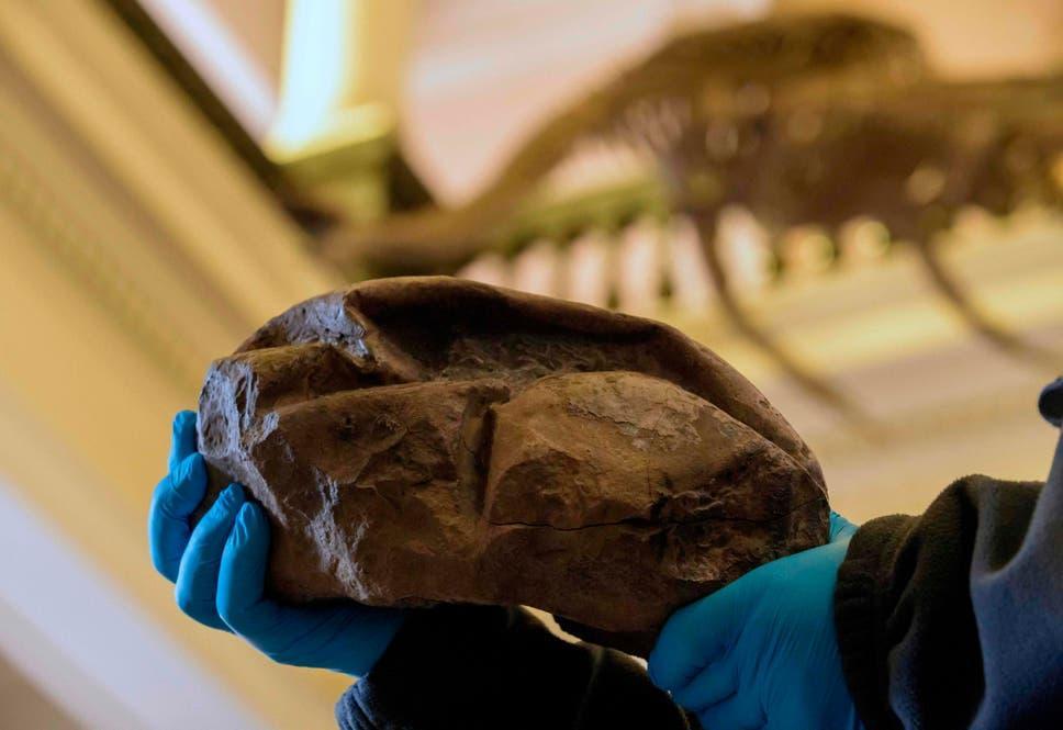Невідома знахідка виявилася яйцем/ Chilean National Museum of Natural History
