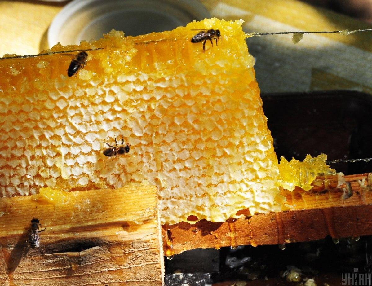 Украина увеличила экспорт меда почти на 30% / фото УНИАН