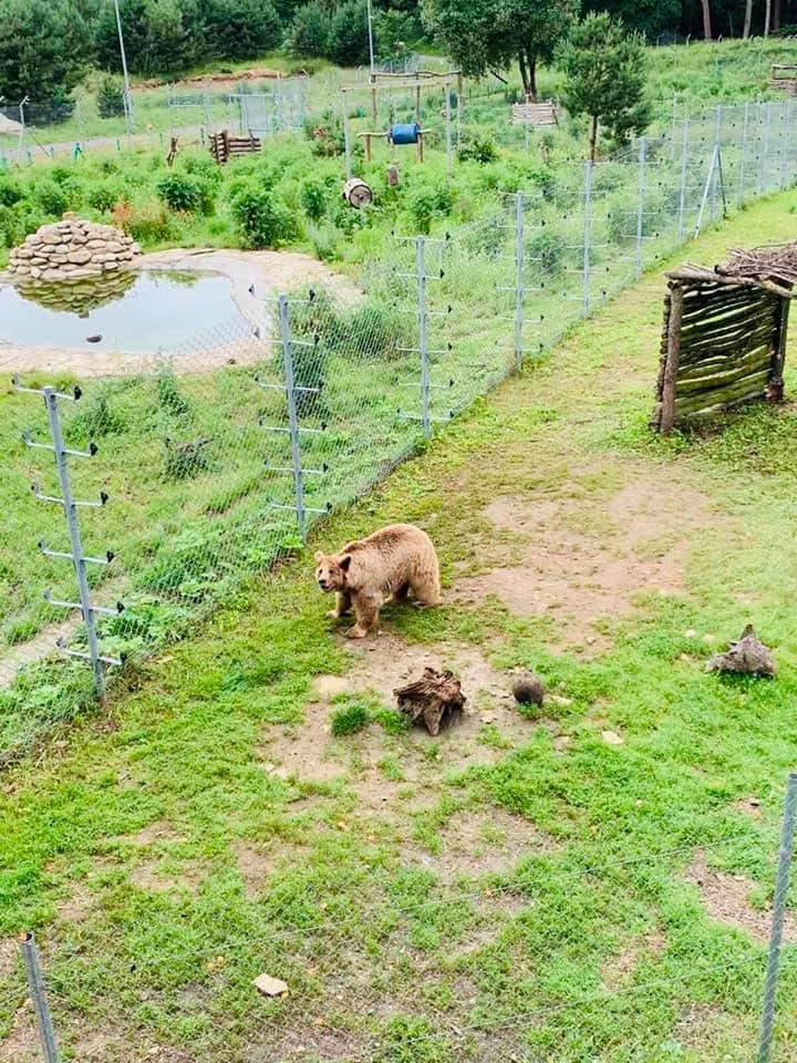 «Домажир» – это уникальный центр спасения и реабилитации бурых медведей \ ЛОГА