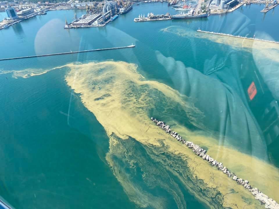 К берегу прибилось много водорослей, которые под воздействием высокой температуры воздуха начали разлагаться / Viknianskiy Nikolay, Facebook