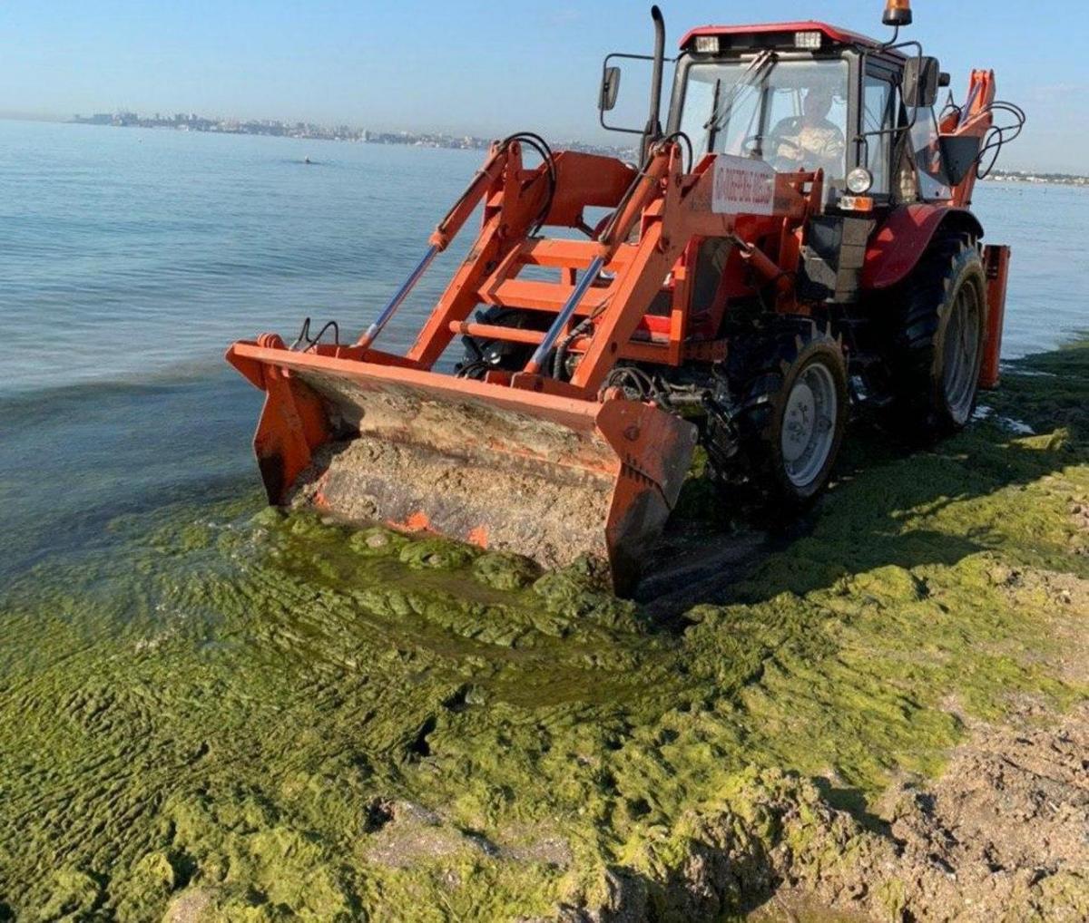 Власти говорят, что водоросли не несут опасности / фото: мэрия Одессы