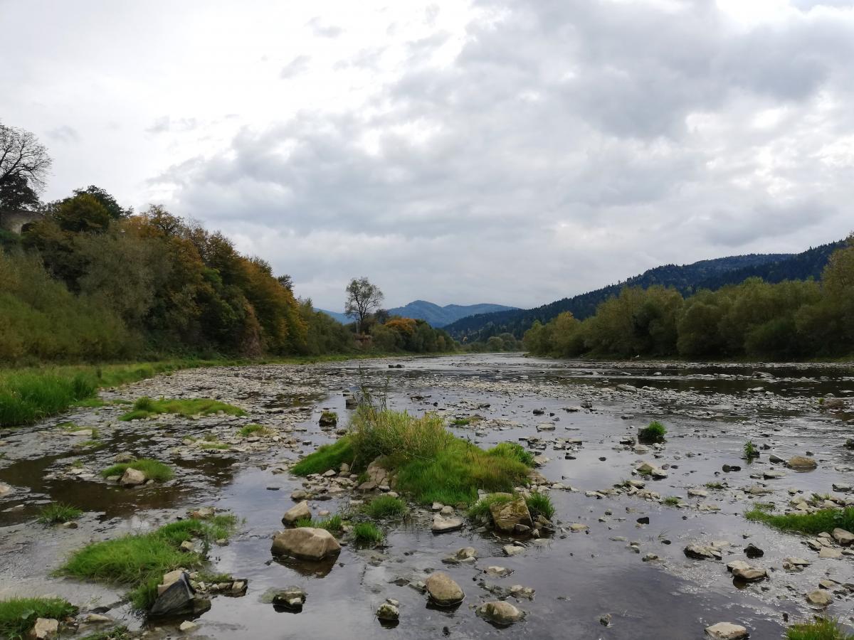 Река Стрый недалеко от Сходницы / фото Марина Григоренко