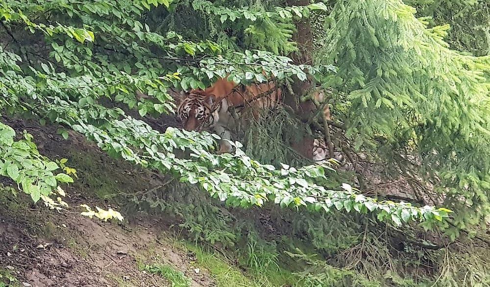 Від отриманих поранень жінка померла на місці / фото The Blick