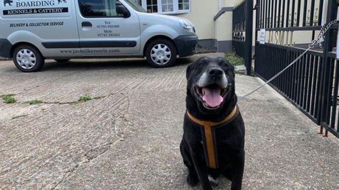 Собаку прив'язали до воріт готелю для тварин / фото bbc.com
