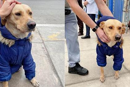 Собака до сих пор ждет, пока ее хозяина выпишут из больницы/ Фото: Meli Valderrama