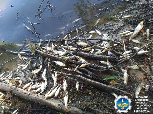 Вода в затоці – жовтувато-бурого кольору з характерним запахом сірководню / darg.gov.ua
