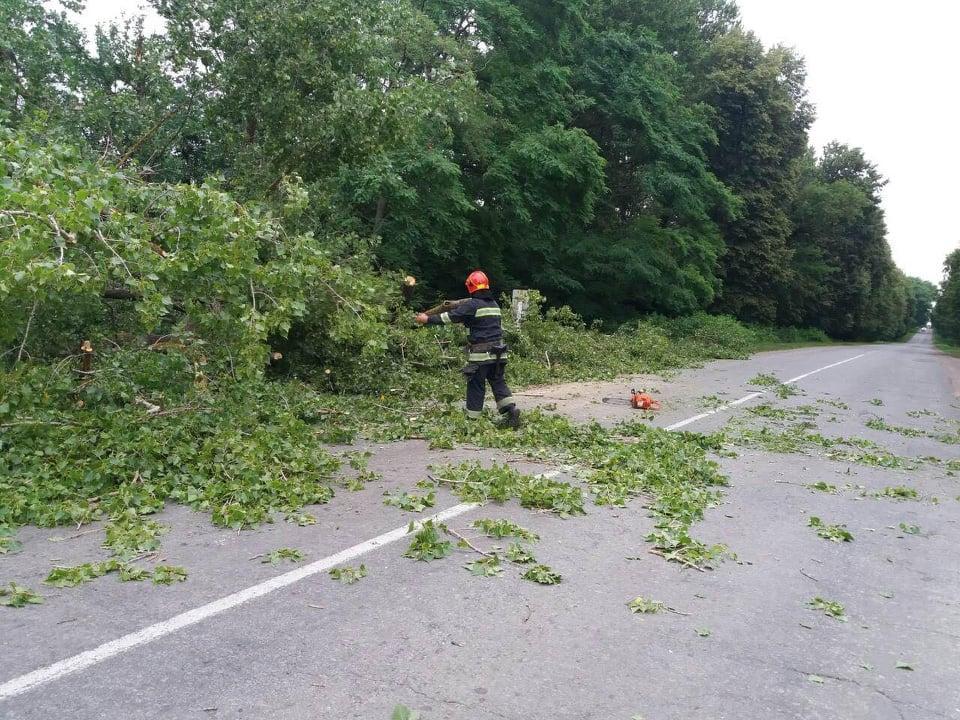 На Винничине мощный ветер повалил деревья / ГСЧС