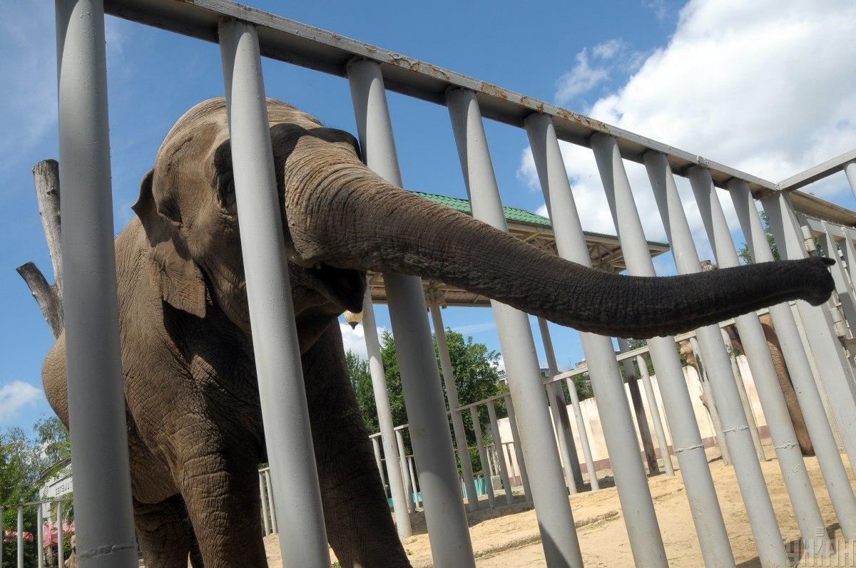 Ученые исследовали ожирение слонов и пришли к странным выводам / фото УНИАН