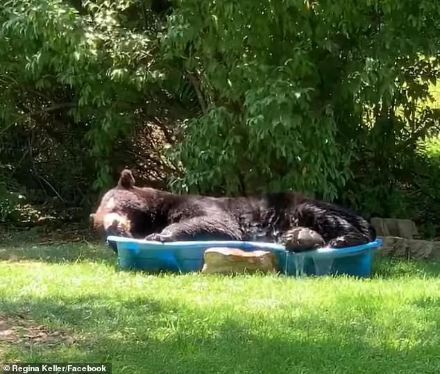 Ведмідь вирішив відпочити у воді від спеки / Фото Regina Keller