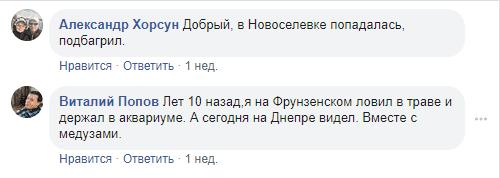 Комментарии заметке под / Фото скриншот