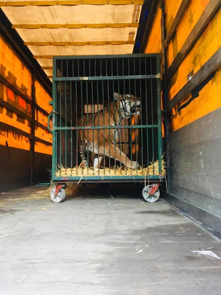 Каждый тигр в частных руках - это в прошлом браконьерство / фото https://www.facebook.com/lvitsaYana