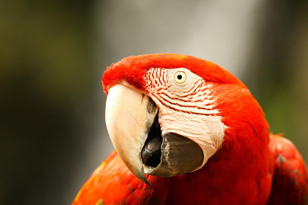 В Британии родились редкие попугаи / фото ua.depositphotos.com