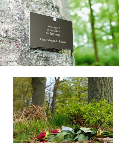 Ліс-кладовище FriedWald (Німеччина)