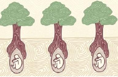 Схема подачі нової зеленої еко ідеї з Аппенін