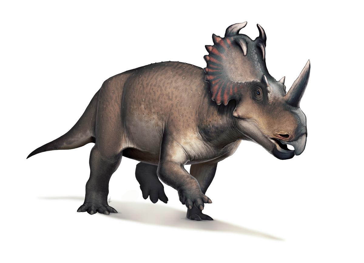 Центрозавры могли болеть остеосаркомой / wikipedia.org