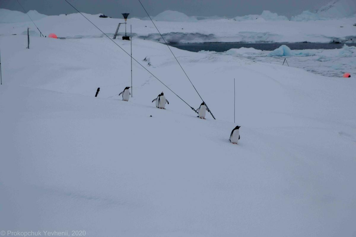 National Antarctic Research Center