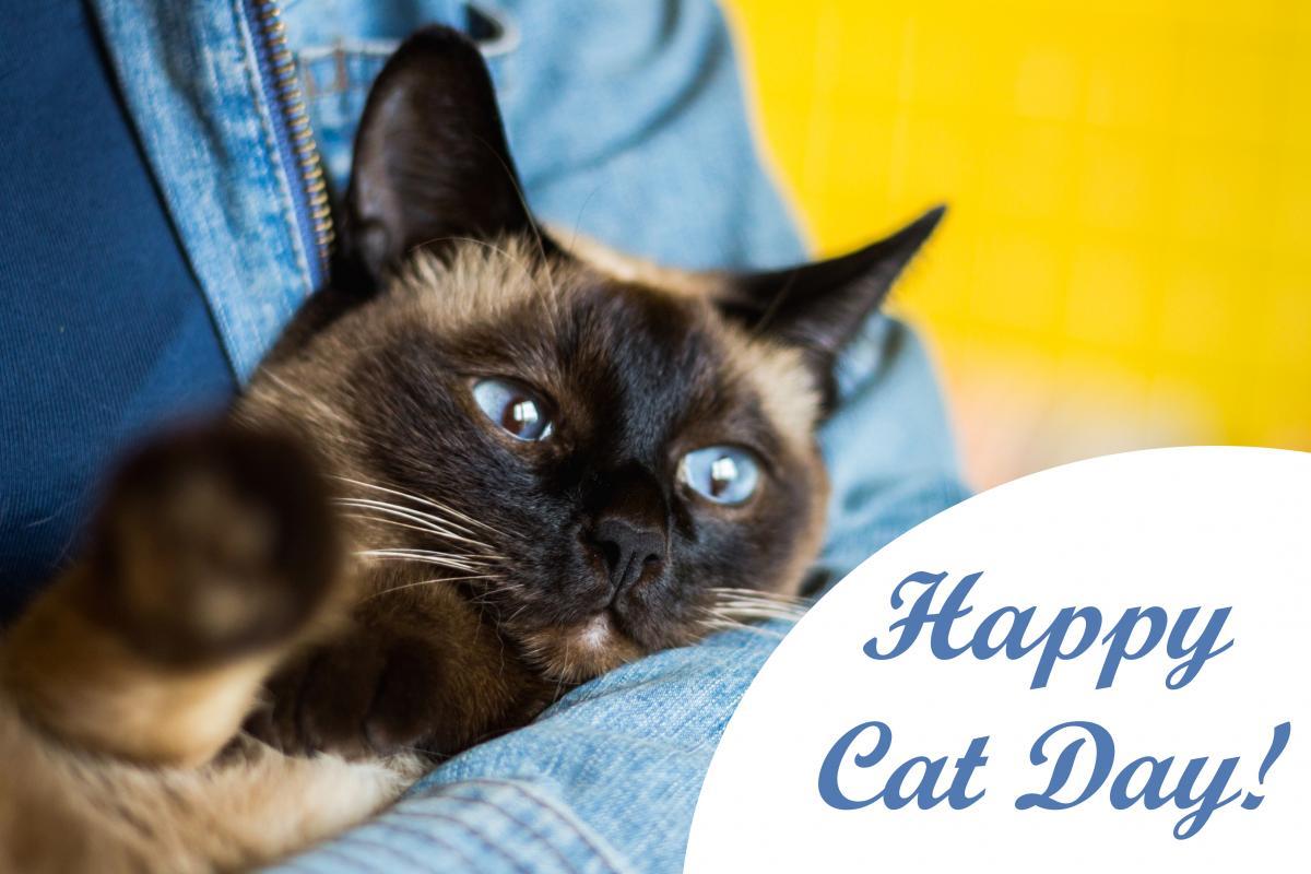 Всесвітній День кішок / фото ua.depositphotos.com