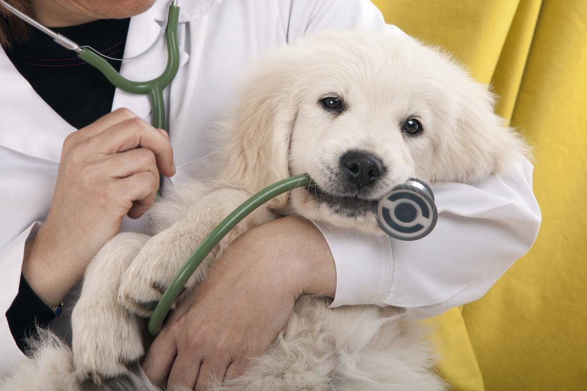День працівників ветеринарної медицини 2020 / фото ua.depositphotos.com