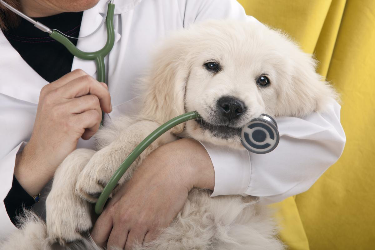 Руководитель ветклиники извинился и пообещал лечить четвероногих пациентов бесплатно в течение двух лет / фото ua.depositphotos.com