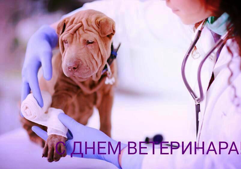 Картинки з Днем ветеринара / privetpeople.ru