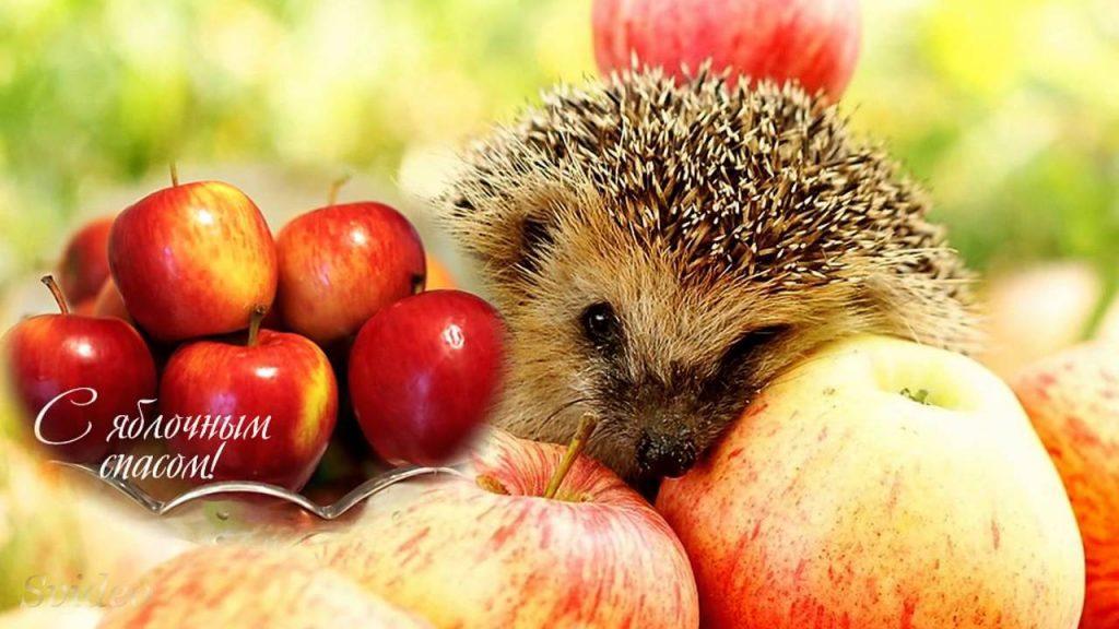 Картинки зі святом Яблучний спас