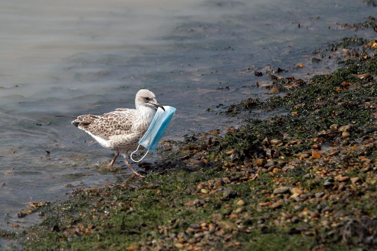 От масок, попавших в море, погибают животные \ фото REUTERS