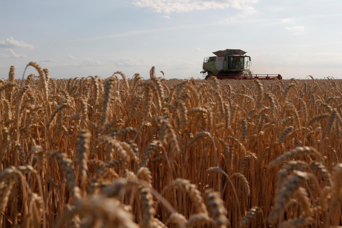 В Минэкономразвития рассказали, сколько зерна уже собрали в Украине / REUTERS