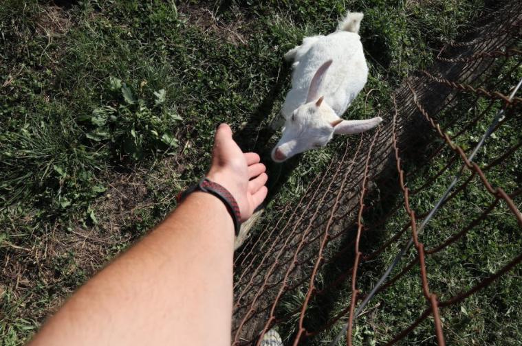 """По ферме можно заказать экскурсию, в рамках которой можно познакомиться с обитателями фермы-козами и лошадками / фото блог """"Сам себе Колумб"""""""