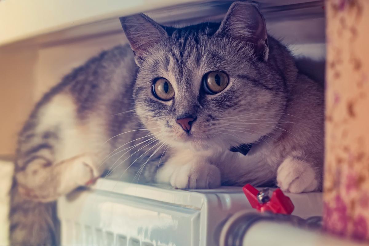 В Одесской области живодер издевался над котами /фото ua.depositphotos.com