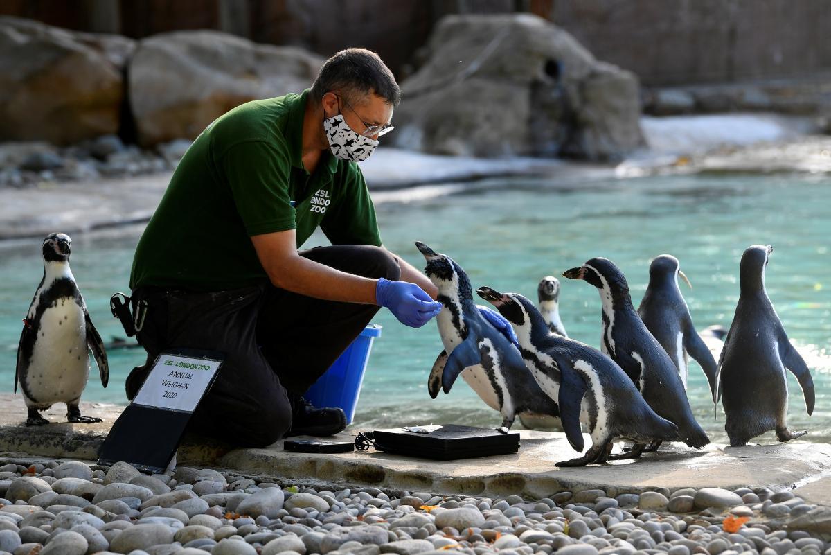 Большое взвешивание в Лондонском зоопарке / фото REUTERS