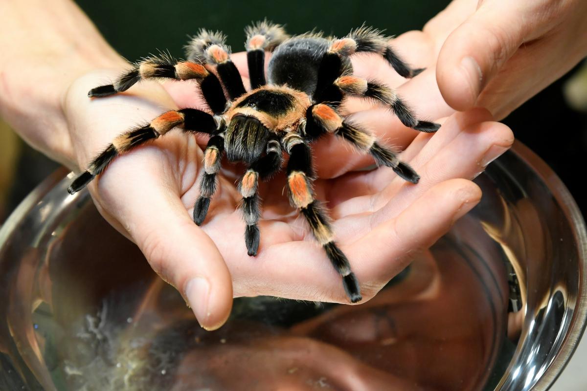 К чему снится паук / фото REUTERS