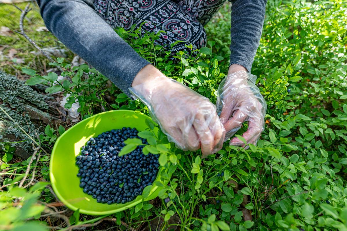 Українським збирачам ягід заборонили в'їзд до Фінляндії / фото ua.depositphotos.com