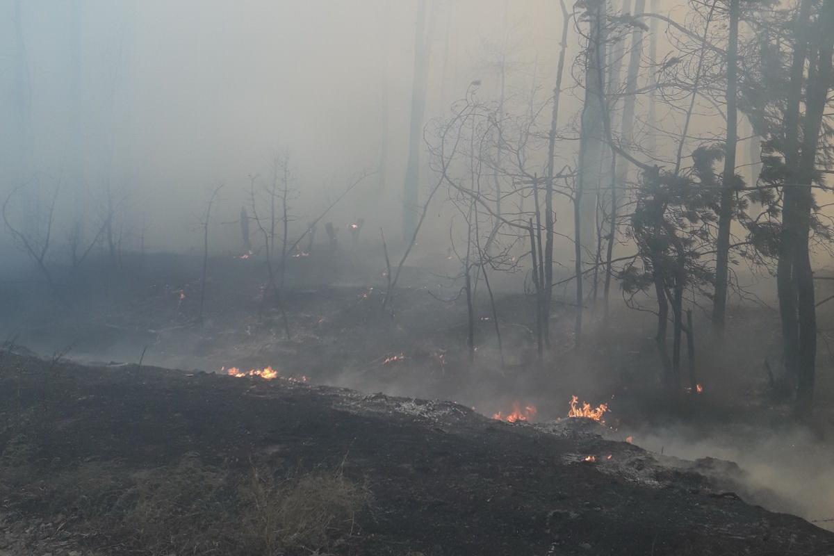 Масштабные пожары продолжаются и в районе ООС / фото ГСЧС