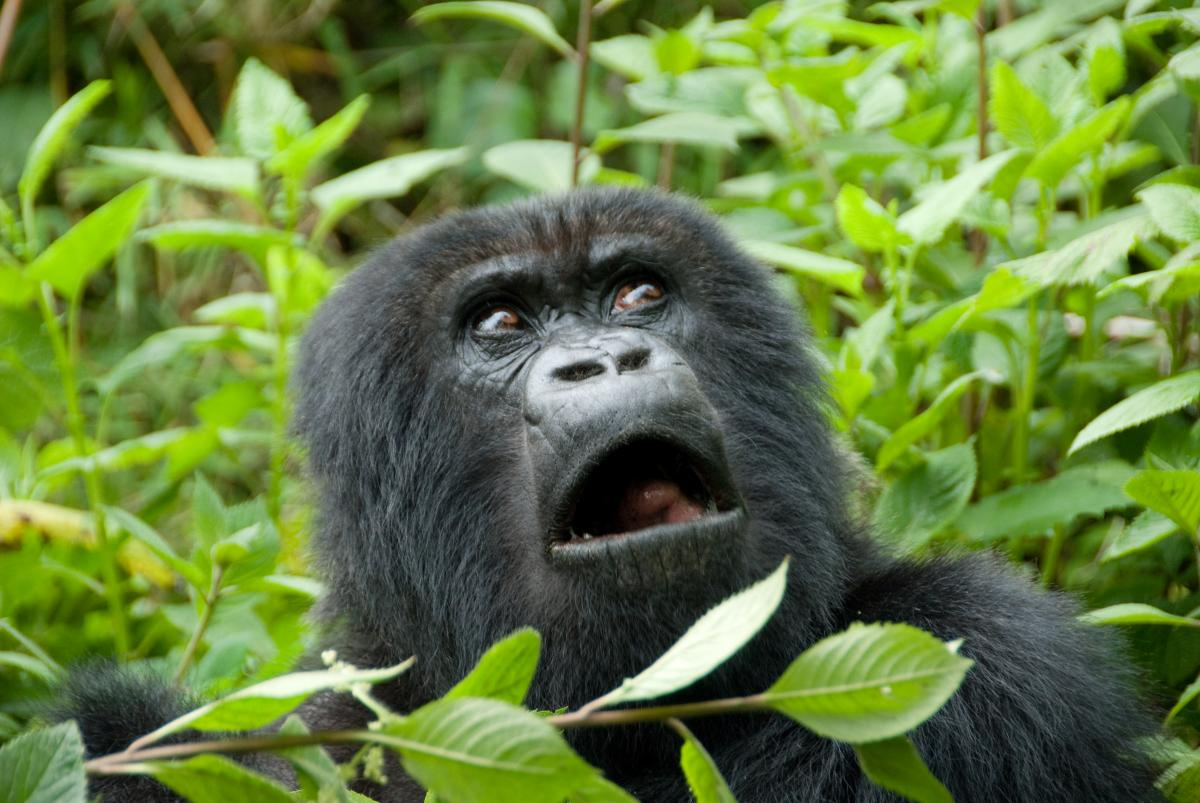 П'ята частина диких видів тварин знаходиться під загрозою зникнення вже в цьому столітті / фото ua.depositphotos.com