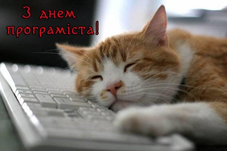 Листівки з Днем програміста / liza.ua