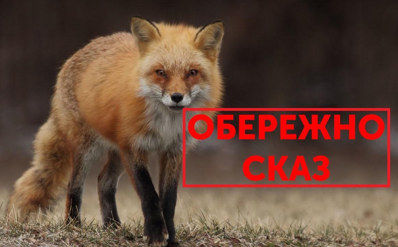 Кировоградщина страдает от лисиц, переносящих бешенство / Facebook, Новомиргородская районная государственная администрация