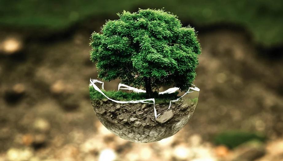 26 января - Всемирный день экологического образования / фото pixabay.com