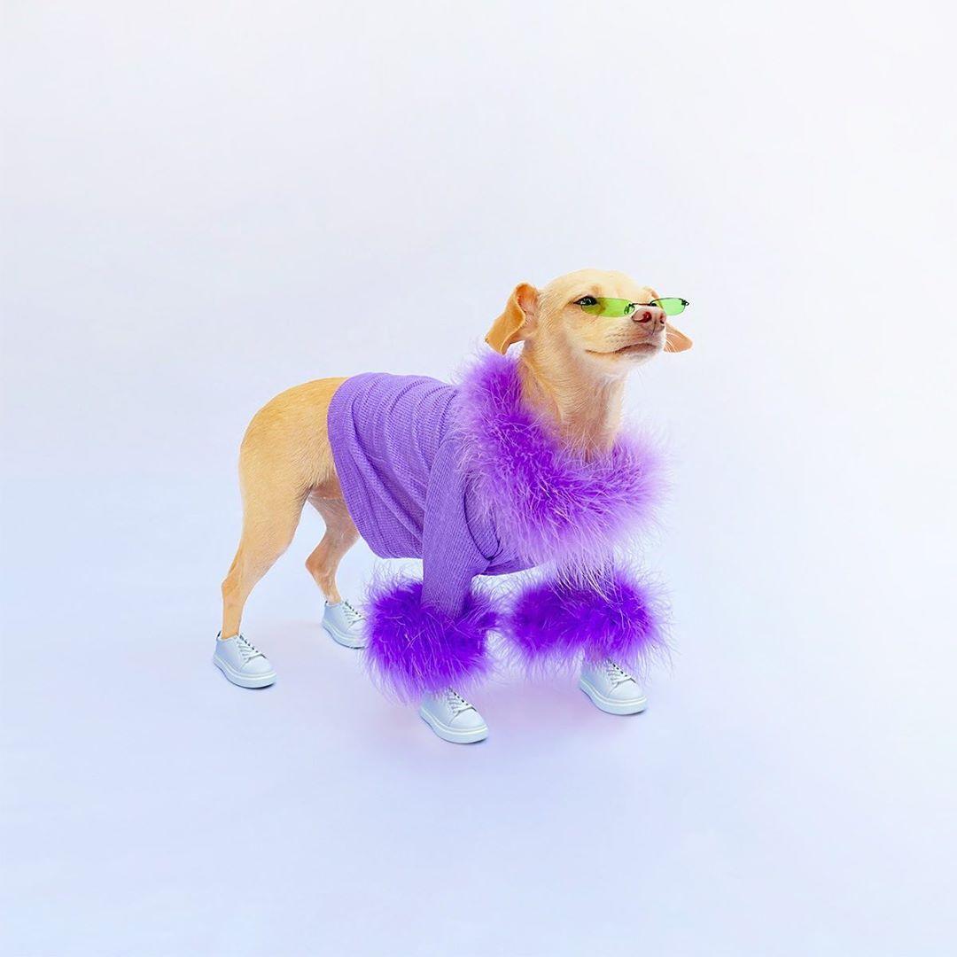 Собака выпустит одежду / instagram.com/boobie_billie