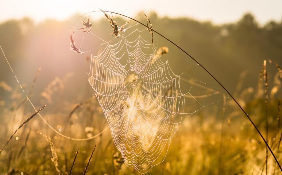 Що не можна робити в осіннє рівнодення / фото ua.depositphotos.com