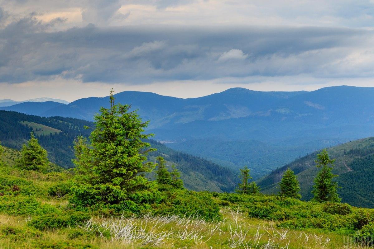 Вырубка лесов приносит региону множество неприятностей / фото УНИАН, Янош Немеш