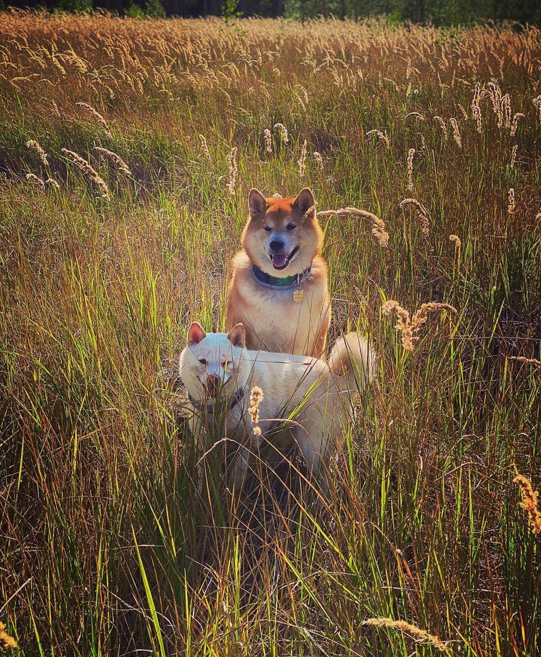 Астафьева показала, как отдохнула в лесу с домашними любимцами / фото instagram.com/da_astafieva
