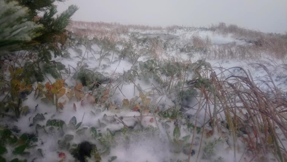 У карпатах випав перший сніг / фото Степан Олексюк, Facebook
