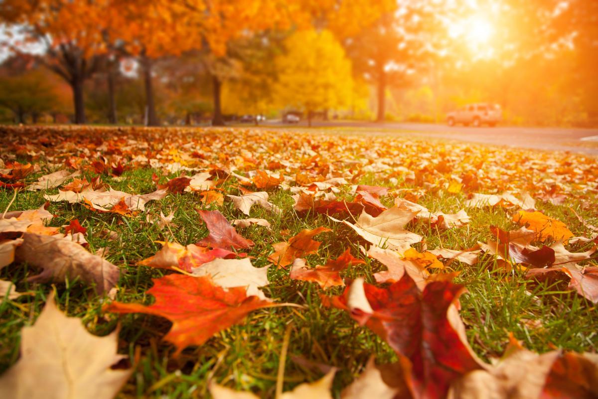 Несмотря на осень, в Украину на пару дней вернется летнее тепло / depositphotos.com